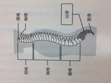 鍼灸・AOIブログ~  仙骨を温めて、元気に過ごしましょう!~