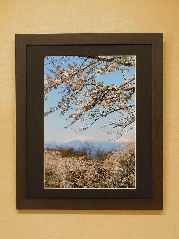 遠い山と桜  (駒ヶ根市・光前寺)  4月中旬