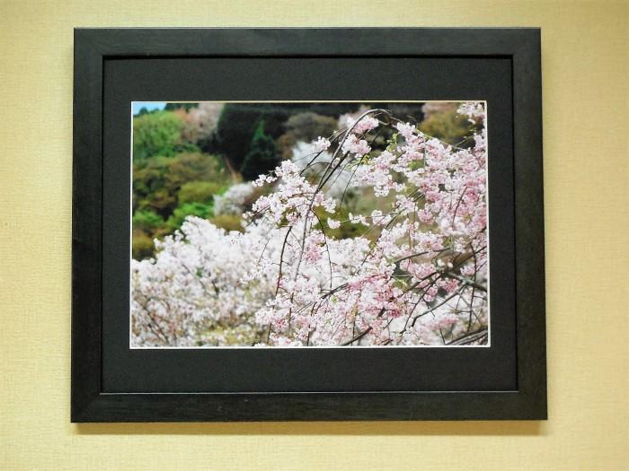 吉野の桜 (Ⅰ) 中千本